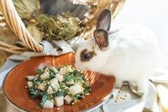 Pera ed insalata della rucola con i pinoli vicino al bello coniglio bianco Fotografie Stock