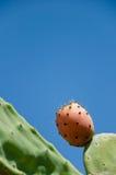 Pera espinosa del higo Fotografía de archivo