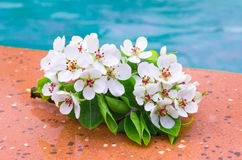 Pera floreciente Fotografía de archivo libre de regalías