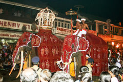 Pera Hera in Kandy with dressed-up elephants. CANDY, SRI LANKA  - August 12: man are riding on their beautiful dressed trained working elefants in the festival Royalty Free Stock Photography