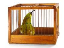 Pera, preso en la jaula. Fotos de archivo libres de regalías