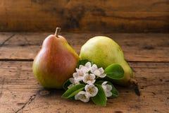 Pera rossa con la pera di fioritura Fotografia Stock