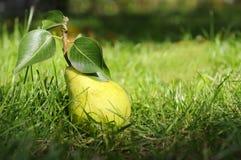 Pera verde con i leafes su erba. Fotografie Stock Libere da Diritti