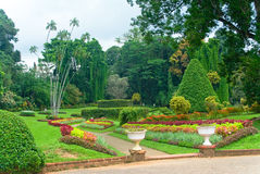 peradenia βοτανικών κήπων Στοκ εικόνα με δικαίωμα ελεύθερης χρήσης