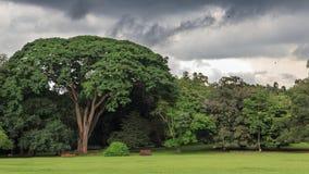 Peradeniya Koninklijke Botanische Tuinen - Kandy - Sri Lanka stock foto's
