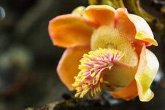 Peradeniya ogródy botaniczni Obrazy Royalty Free