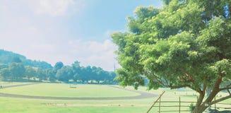 Peradeniya University Ground Royalty Free Stock Photography