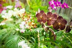 Peradeniyabloem, tropische installaties op Sri Lanka royalty-vrije stock afbeelding