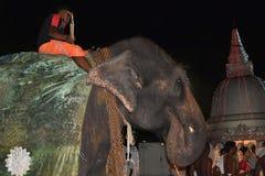 Perahera大象,斯里兰卡 免版税库存照片