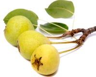 Peras aisladas Fruta verde de la pera aislada en el fondo blanco Imagenes de archivo