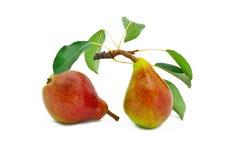 Peras brilhantes maduras com folhas Fotos de Stock