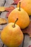 Peras da colheita de outubro Fotografia de Stock Royalty Free