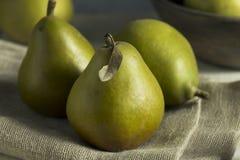 Peras de Seckel orgânicas verdes cruas Imagens de Stock