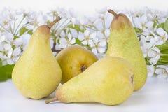 Peras e flores maduras Fotos de Stock