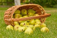Peras en la cesta Fotos de archivo