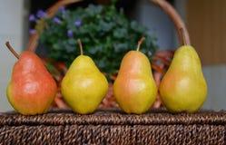 Peras maduras colocadas em uma linha Fotografia de Stock Royalty Free