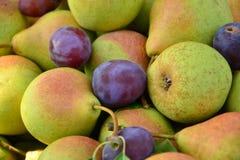Peras maduras recolectadas en el jardín de la fruta Imagen de archivo