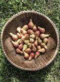 Peras pequenas em uma cesta redonda Imagens de Stock Royalty Free