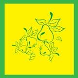 Peras verdes con el jardín de la cosecha de las hojas Imágenes de archivo libres de regalías