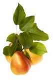 Peras y hojas verdes Imagen de archivo