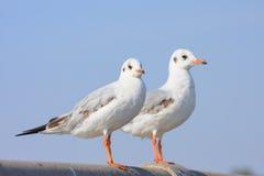 Perca de los pájaros en el puente del carril, fondo Fotos de archivo libres de regalías