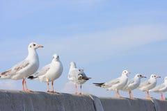 Perca de los pájaros en el puente del carril, fondo Fotografía de archivo