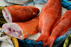 Perca fish in red selling in market Stock Photos
