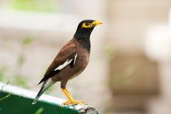 Percas del pájaro en banco en parque Imagenes de archivo