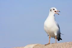 Percas del pájaro en el puente del carril, fondo Imagen de archivo