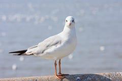 Percas del pájaro en el puente del carril, fondo Fotografía de archivo libre de regalías