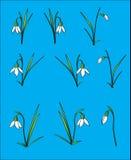 Perce-neige Images libres de droits