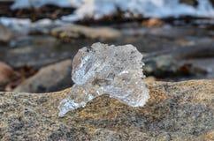 Perce-neige du territoire de Primorye beau et vif jaune Photos libres de droits