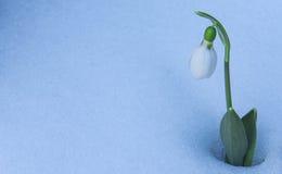 Perce-neige sur la neige Photographie stock