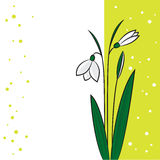 Perce-neige sur un fond vert clair Photographie stock libre de droits