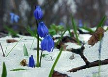 Perce-neige trois cloches au-dessus de neige Images stock
