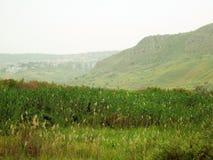 Perceel van plantaardig gebied Stock Afbeeldingen