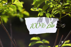 100 percent bio message in nature. One hundred percent bio advertisement on piece of paper cardboard on tree branch in nature Stock Photo