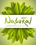 100 percent natural card with fresh green leaves, advertising ba. Nner, vector design made in paper cut realistic style royalty free illustration