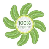 100 percent organic logo. 100% organic sign with green banana leaves. Vector illustration royalty free illustration