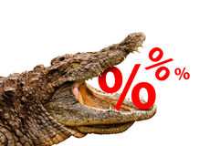 Percentage signs eaten by crocodile Royalty Free Stock Photos