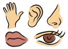 percepcja sensoryczna Zdjęcia Stock