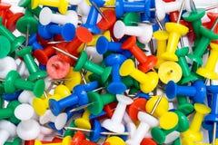 Percevejo colorido Foto de Stock