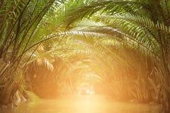 Percez un tunnel des palmiers de Nypa le long de canal avec le bateau et la lumière au tunnel d'endof Images stock