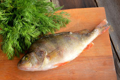 Perch with fennel. Raw fish (perch) with fennel on wooden background Royalty Free Stock Photo
