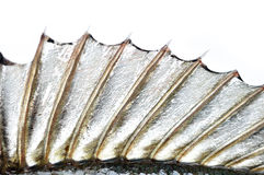 Perch fin Stock Photo