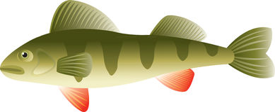 Perch fish Stock Photos