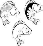 Perch. Fish - clip art illustration Royalty Free Stock Photography