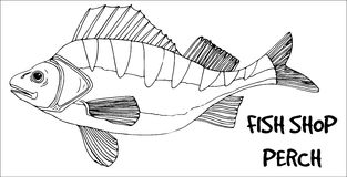 Perch fish doodle in lines on white background. Stock Image