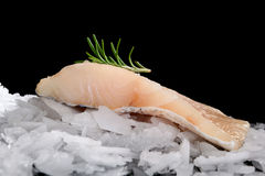 Perch fish fillet on ice. Royalty Free Stock Images
