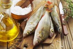 Perch, fish Royalty Free Stock Image